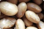 北海道の大豆