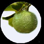 柚子(高知県産)